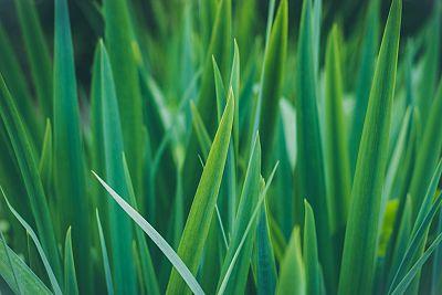 Grass Compression